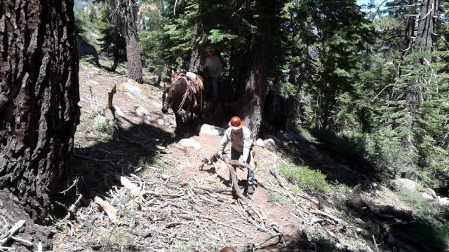 Man clearing trail