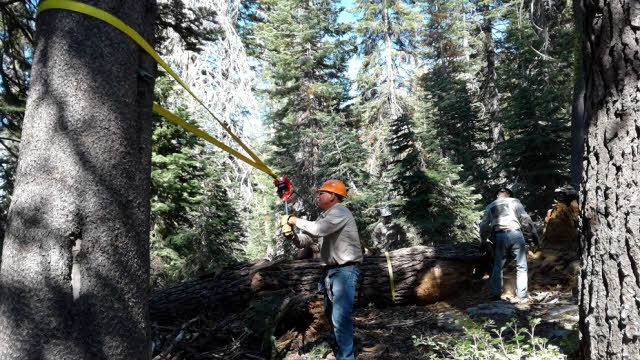 Men clearing trail